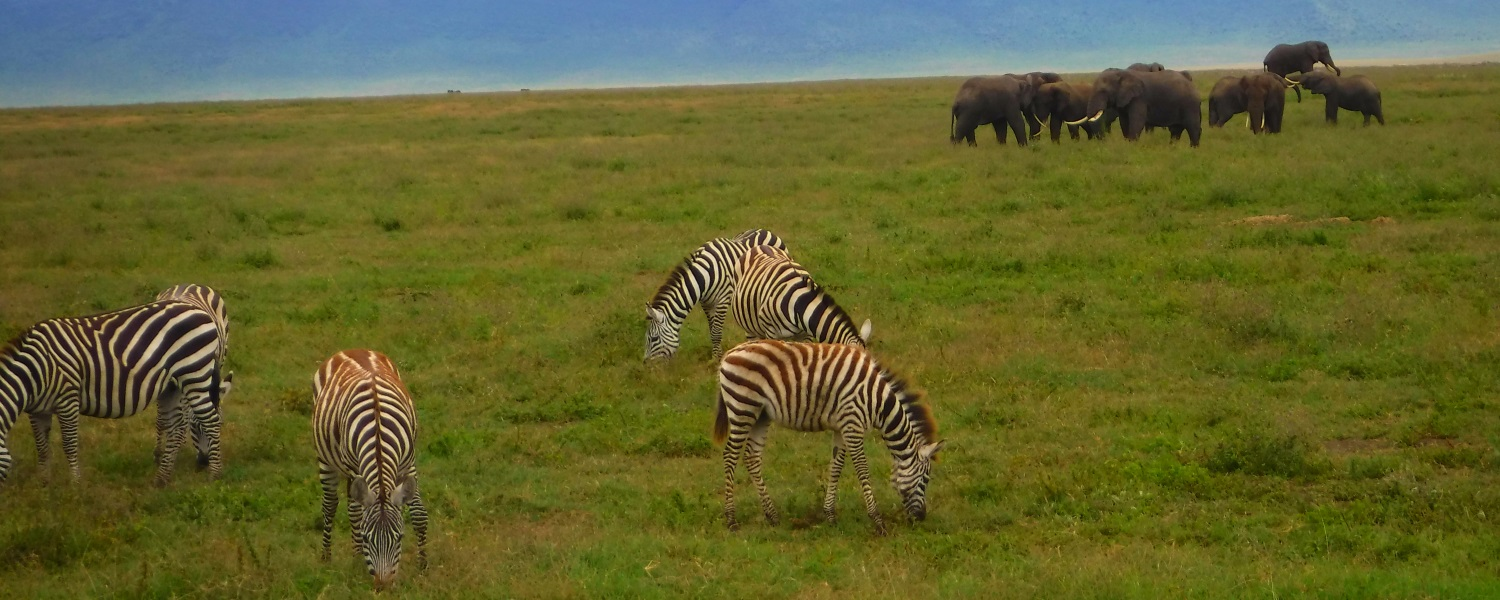 Zebra, Elephants in Ngorongoro Crater