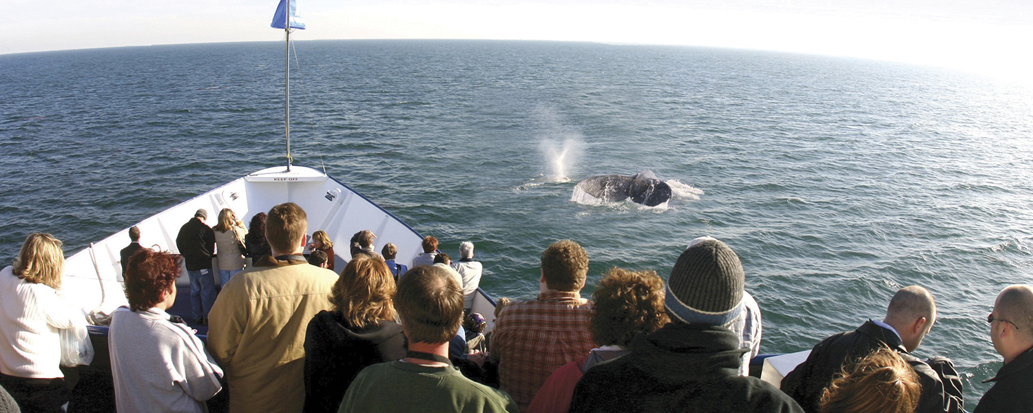 Hornblower San Diego Whale Watching Tour