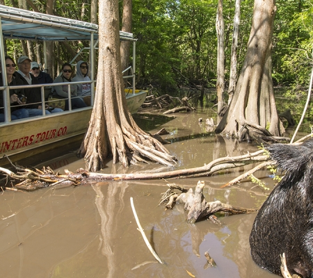 Wildlife on a Honey Island Swamp Tour with Cajun Encounters