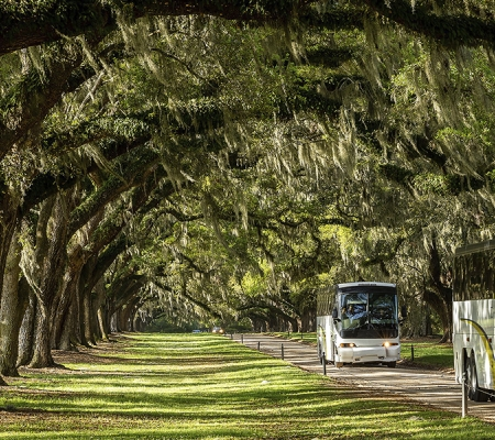 Avenue of Oaks at Boone Hall Plantation
